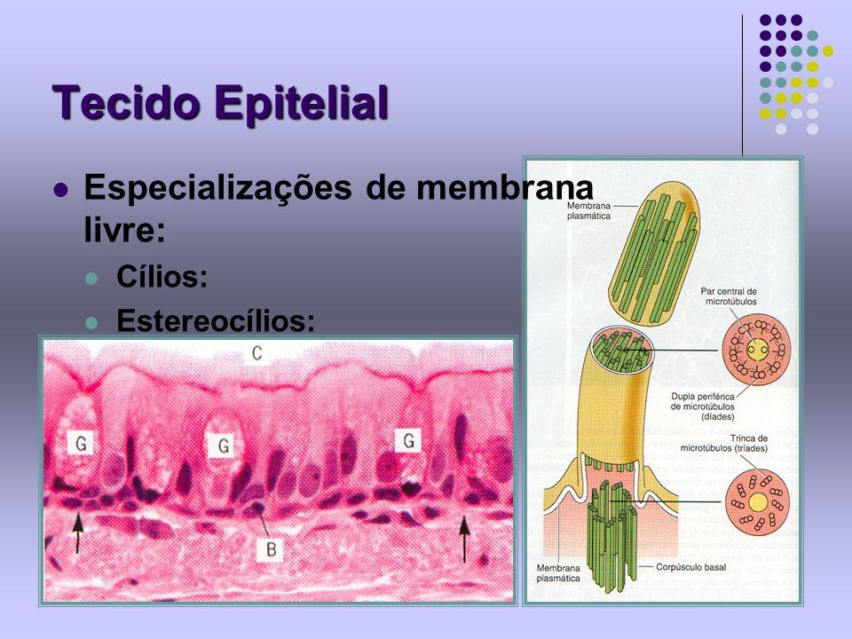 Tecido Epitelial Especializações de membrana livre: Cílios: Estereocílios: