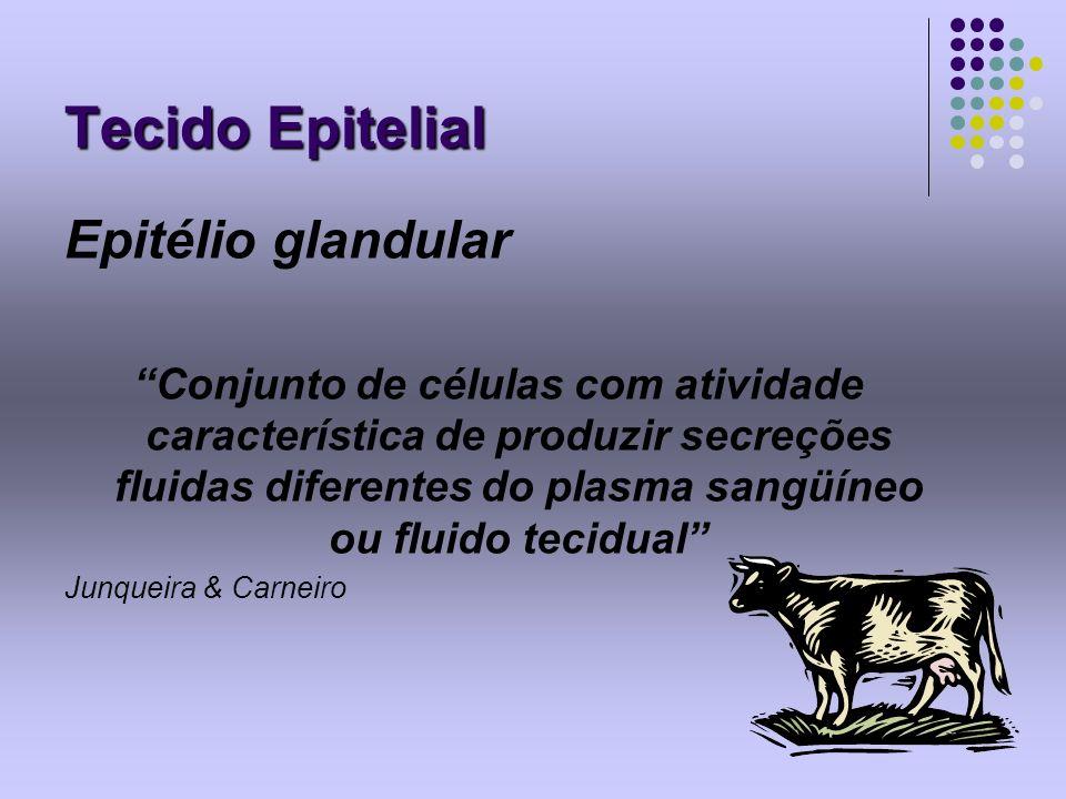 Tecido Epitelial Epitélio glandular Conjunto de células com atividade característica de produzir secreções fluidas diferentes do plasma sangüíneo ou f