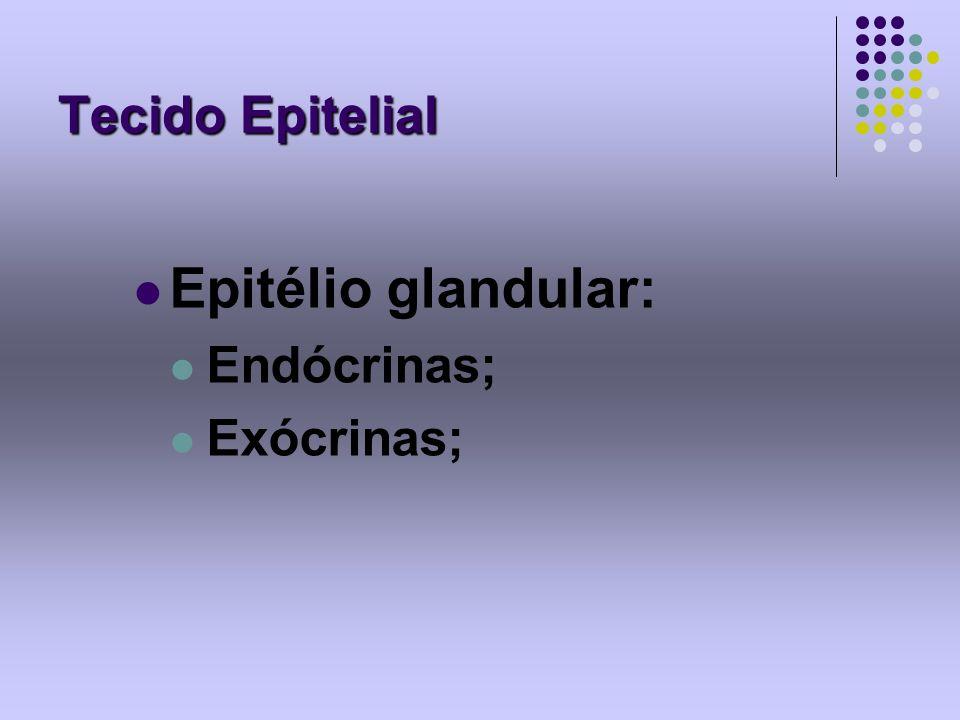Tecido Epitelial Epitélio glandular: Endócrinas; Exócrinas;