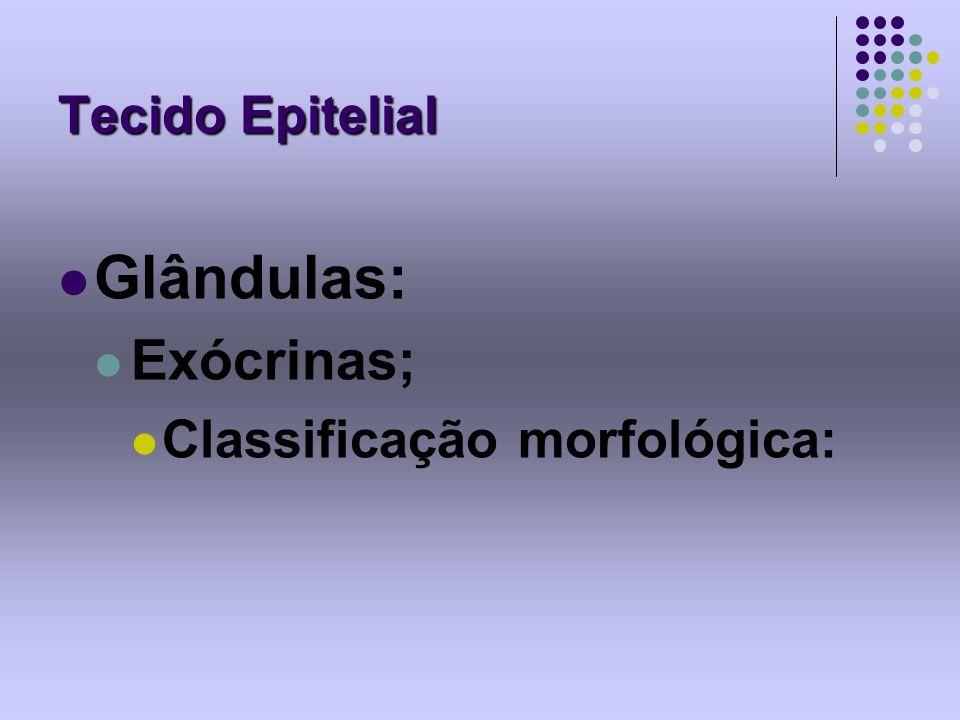 Tecido Epitelial Glândulas: Exócrinas; Classificação morfológica:
