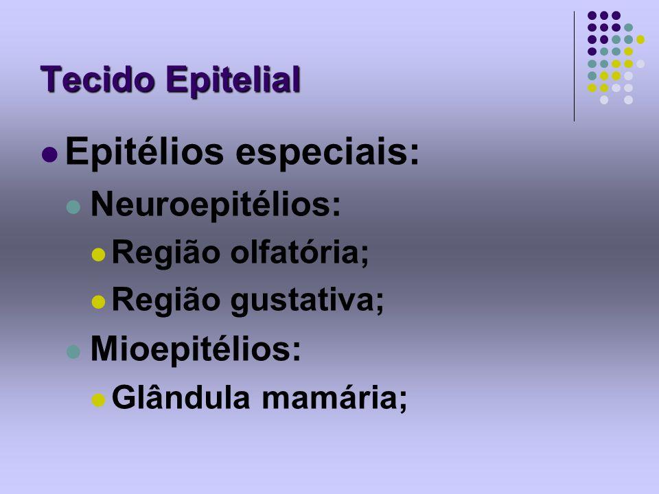 Tecido Epitelial Epitélios especiais: Neuroepitélios: Região olfatória; Região gustativa; Mioepitélios: Glândula mamária;