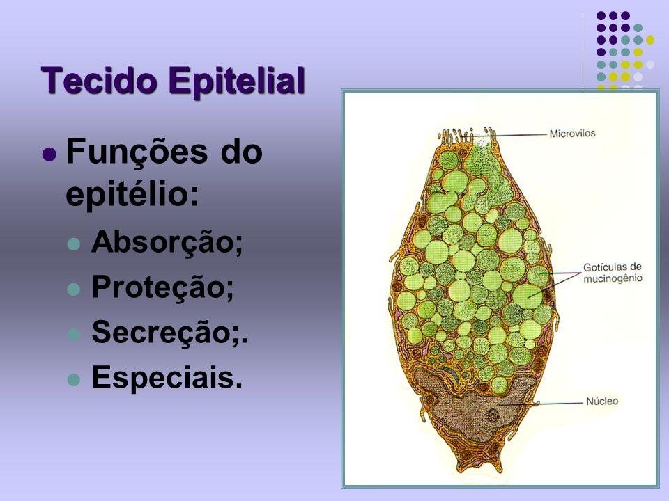 Tecido Epitelial Funções do epitélio: Absorção; Proteção; Secreção;. Especiais.
