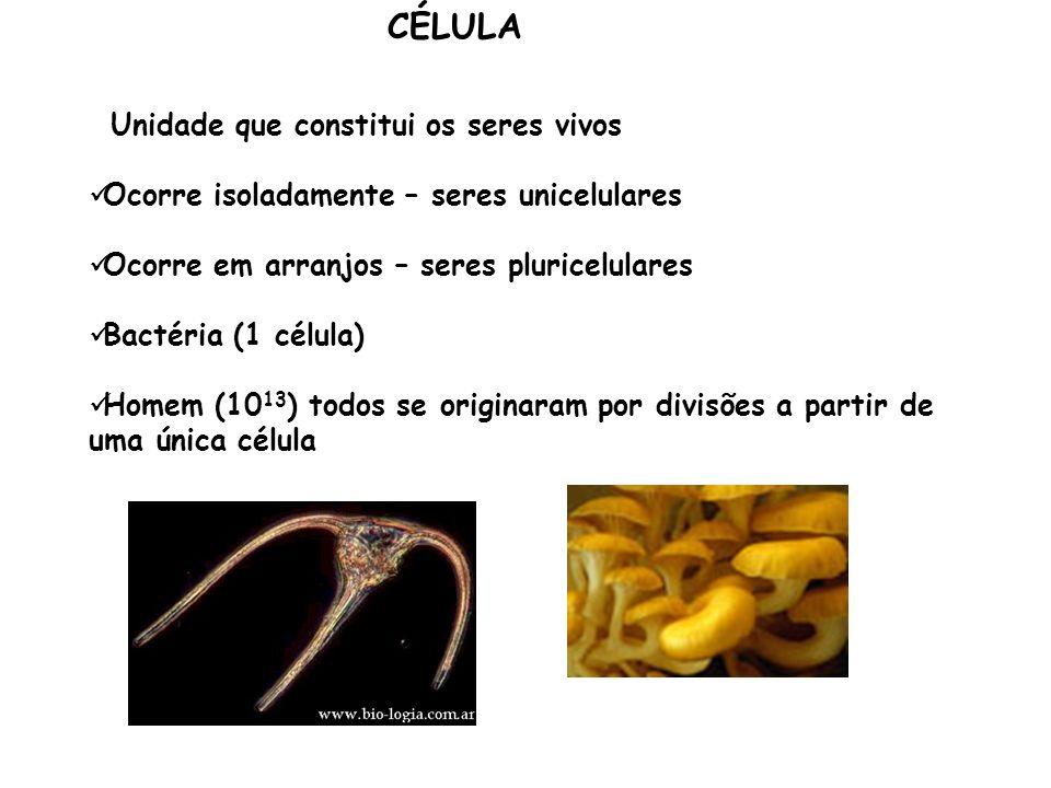 Matriz extracelular rígida Responsável por características especiais de crescimento, nutrição, reprodução e defesa presente nos vegetais; Constituída por fibrilas de celulose embebidas em uma substância hidrofílica constituída por hemicelulose, pectina ácida e neutra e glicoproteínas; Espessura varia de 0,1 a vários μm É uma barreira para moléculas acima de 15.000 dáltons Protegem as células contra quedas de pressão osmótica do meio externo Parede celular de vegetais Parede celular de vegetais: