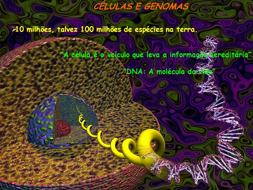 MEMBRANA PLASMÁTICA O transporte em quantidade de material para o interior da célula chama-se endocitose, e o processo inverso, exocitose Os lisosomas são organelas para a digestão intracelular Os microvilos são muito frequentes e aumentam a superfície celular As membranas celulares possuem mecanismos de adesão, vedação do espaço intercelular e de comunicação entre as células