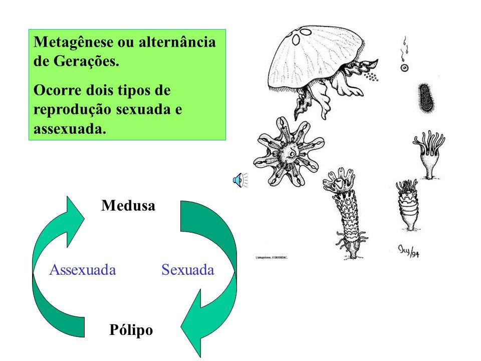Rainha (2n) Zangão (n) Espermatozóides (n) Zigoto (2n) Rainha (2n) Óvulos (n) Operária (2n) Mitose E! Meiose R! s/ fecundação Fecundação Larva aliment