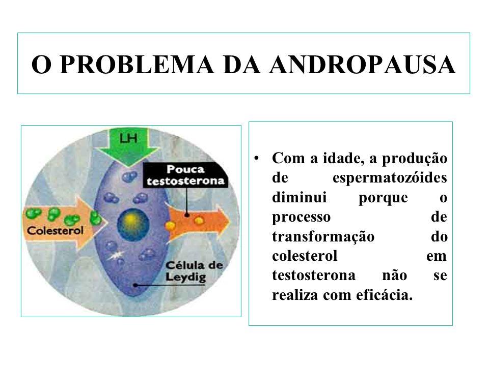 2a - O colesterol é o precursor da maioria dos hormônios sexuais. Nas glândulas, responsáveis pela produção dos hormônios, o colesterol sofre reações