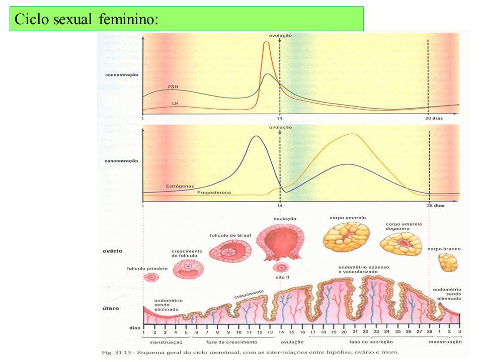 Espermatogênese x ovogênese