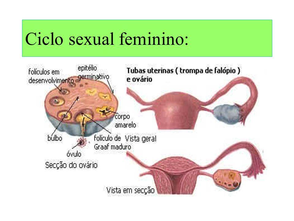 Ciclo sexual feminino: