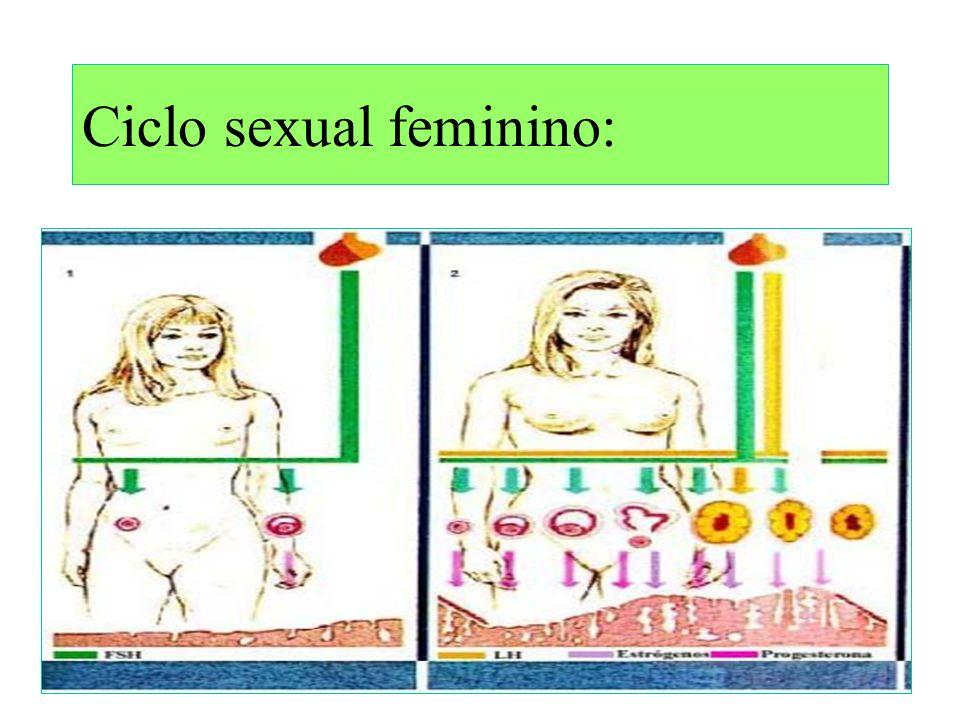 Ovulação ou ovocitação = liberação do ovócito 2