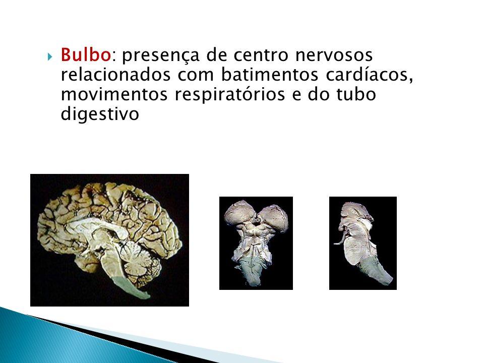 O cerebelo controla o equilíbrio do corpo e a coordenação dos movimentos