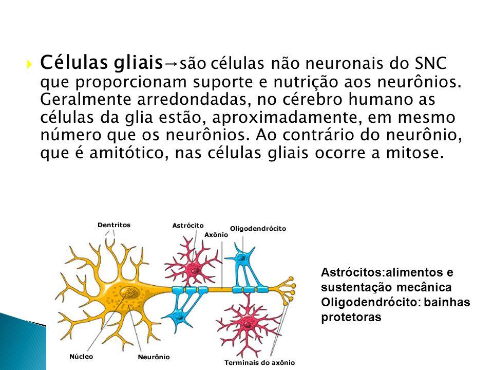 O tecido nervoso compreende basicamente dois tipos celulares: Os neurônios e as células glias. TECIDO NERVOSO