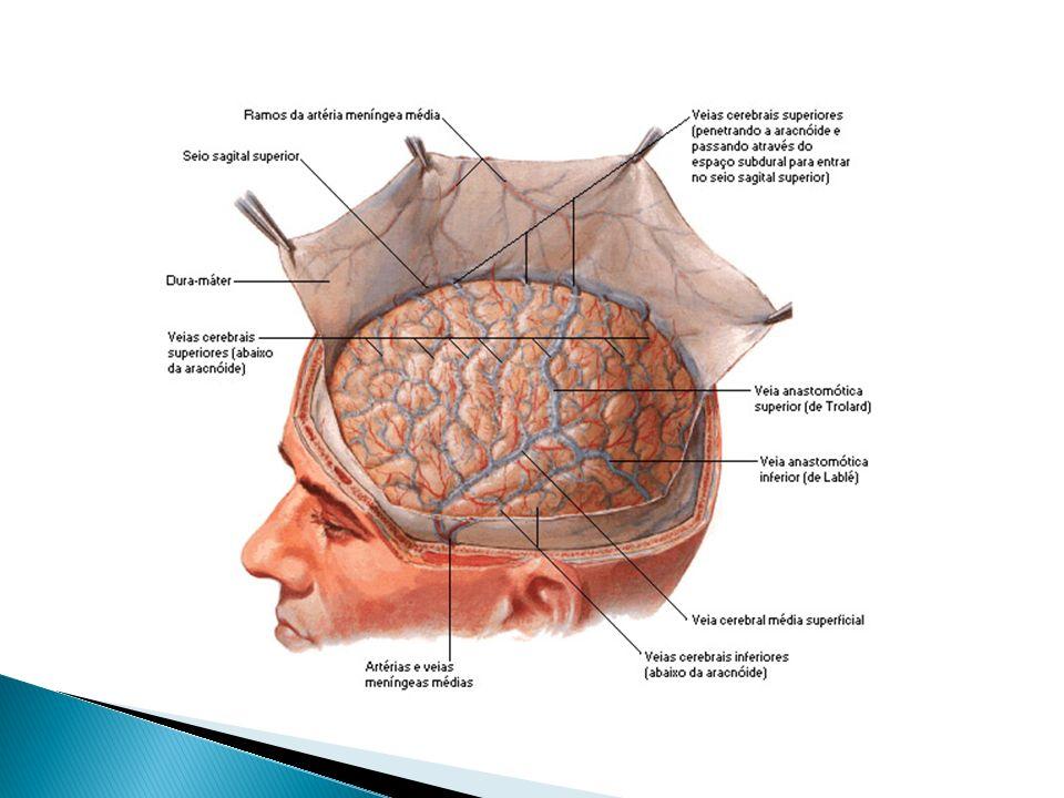 PROTEÇÃO DO S. N. C. O encéfalo e a medula estão protegidos pelos elementos ósseos (crânio e vértebras), por membranas finas chamadas meninges e pelo