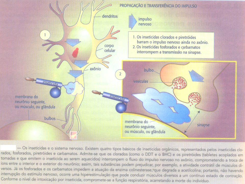 PRINCIPAIS DISTÚRBIOS DO SIST. NERVOSO AVC: obstrução de uma artéria. Lesão irreversível. Fatores de risco: pressão arterial elevada, alto colesterol,