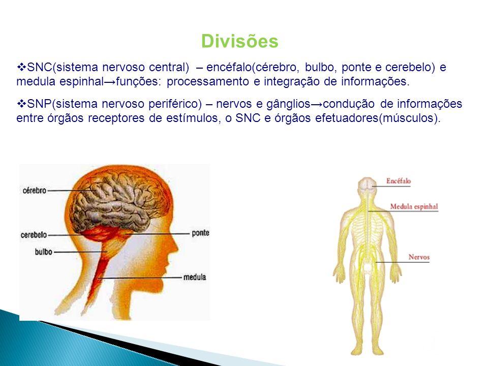 Sistema nervoso dos invertebrados