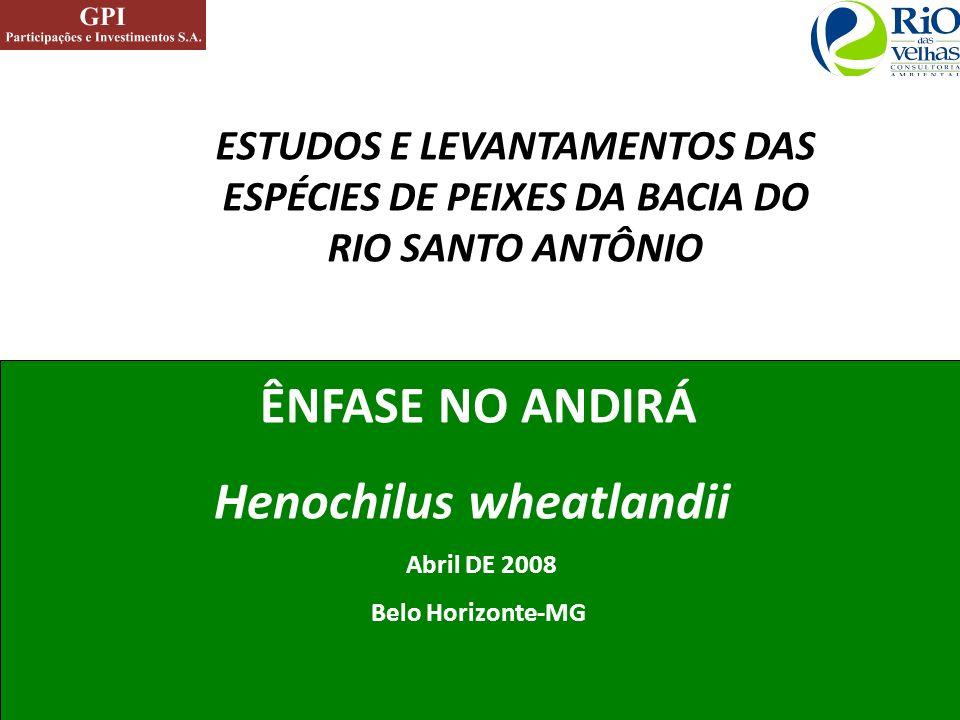 ESTUDOS E LEVANTAMENTOS DAS ESPÉCIES DE PEIXES DA BACIA DO RIO SANTO ANTÔNIO ÊNFASE NO ANDIRÁ Henochilus wheatlandii Abril DE 2008 Belo Horizonte-MG