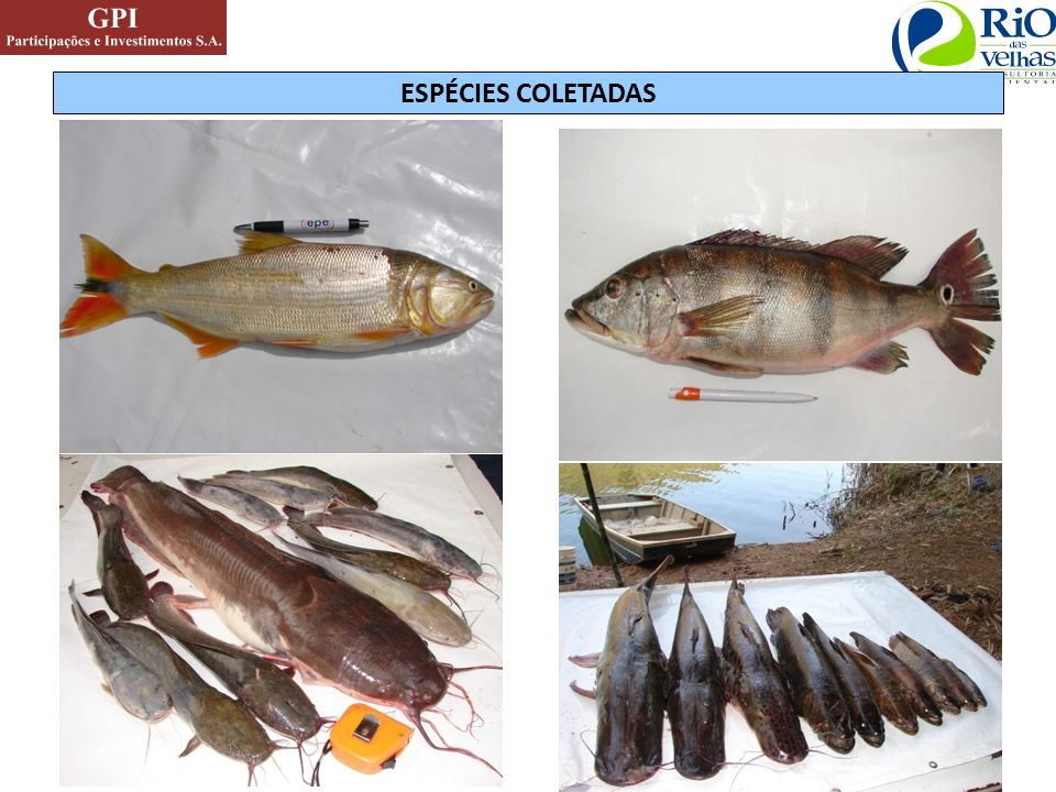 ESPÉCIES COLETADAS