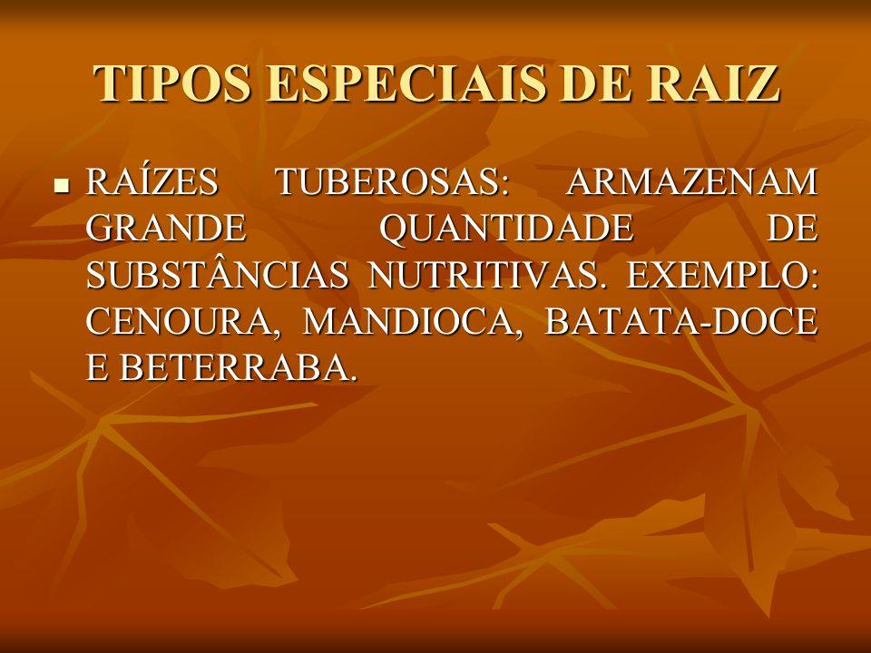 TIPOS ESPECIAIS DE RAIZ RAÍZES TUBEROSAS: ARMAZENAM GRANDE QUANTIDADE DE SUBSTÂNCIAS NUTRITIVAS. EXEMPLO: CENOURA, MANDIOCA, BATATA-DOCE E BETERRABA.