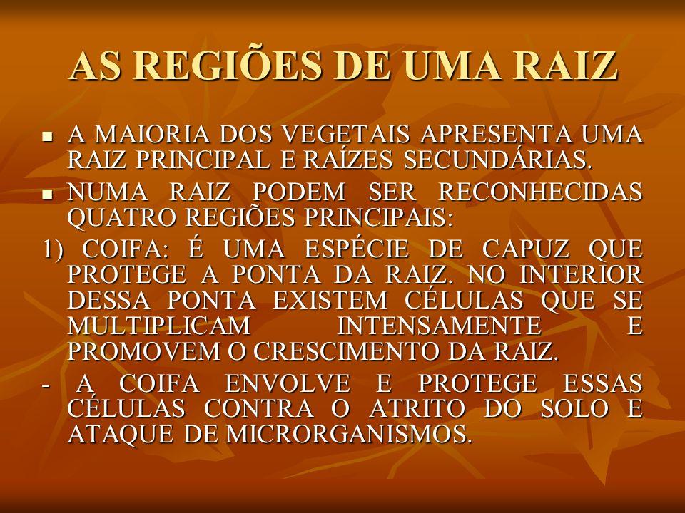AS REGIÕES DE UMA RAIZ A MAIORIA DOS VEGETAIS APRESENTA UMA RAIZ PRINCIPAL E RAÍZES SECUNDÁRIAS. A MAIORIA DOS VEGETAIS APRESENTA UMA RAIZ PRINCIPAL E