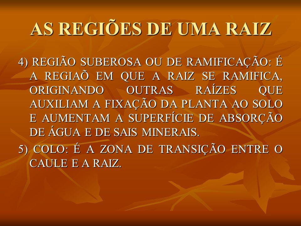 TIPOS ESPECIAIS DE RAIZ RAÍZES ESCORAS: PARTEM DO CAULE E SE FIXAM NO SOLO, AUMENTANDO A SUPERFÍCIE DE FIXAÇÃO DA PLANTA.