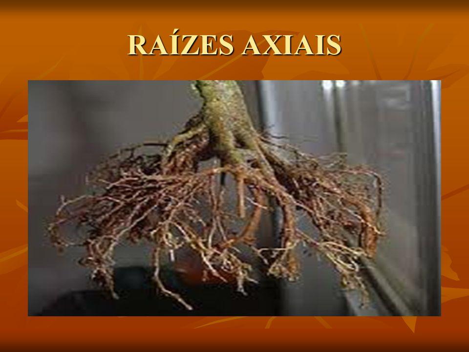 RAÍZES AXIAIS