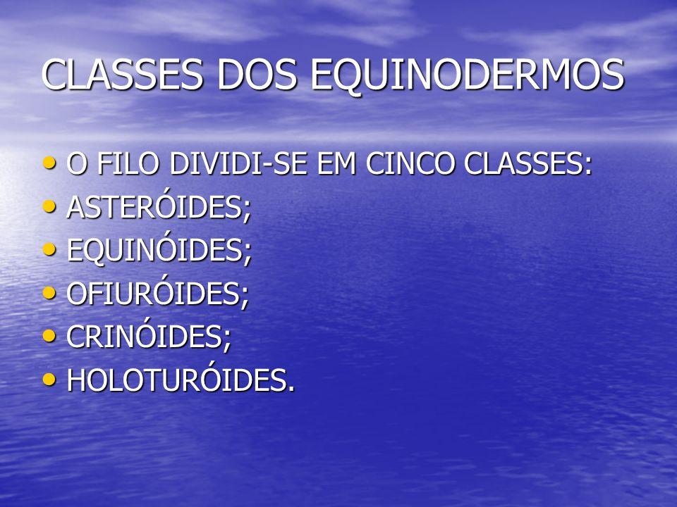 CLASSES DOS EQUINODERMOS O FILO DIVIDI-SE EM CINCO CLASSES: O FILO DIVIDI-SE EM CINCO CLASSES: ASTERÓIDES; ASTERÓIDES; EQUINÓIDES; EQUINÓIDES; OFIURÓI