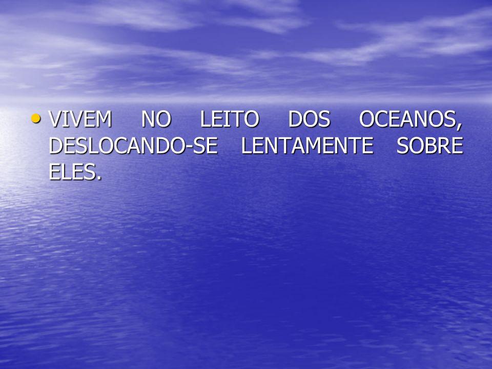 VIVEM NO LEITO DOS OCEANOS, DESLOCANDO-SE LENTAMENTE SOBRE ELES. VIVEM NO LEITO DOS OCEANOS, DESLOCANDO-SE LENTAMENTE SOBRE ELES.