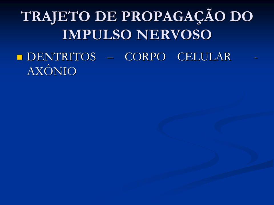 TRAJETO DE PROPAGAÇÃO DO IMPULSO NERVOSO DENTRITOS – CORPO CELULAR - AXÔNIO DENTRITOS – CORPO CELULAR - AXÔNIO