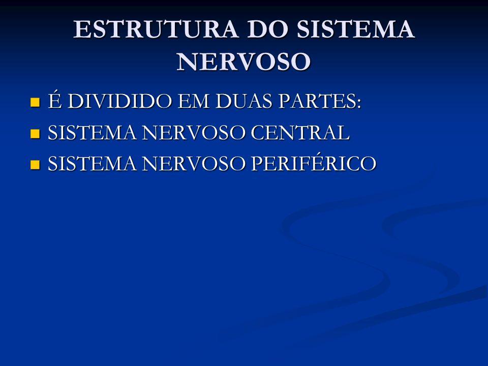 ESTRUTURA DO SISTEMA NERVOSO É DIVIDIDO EM DUAS PARTES: É DIVIDIDO EM DUAS PARTES: SISTEMA NERVOSO CENTRAL SISTEMA NERVOSO CENTRAL SISTEMA NERVOSO PER