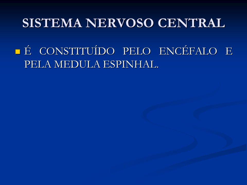 SISTEMA NERVOSO CENTRAL É CONSTITUÍDO PELO ENCÉFALO E PELA MEDULA ESPINHAL. É CONSTITUÍDO PELO ENCÉFALO E PELA MEDULA ESPINHAL.