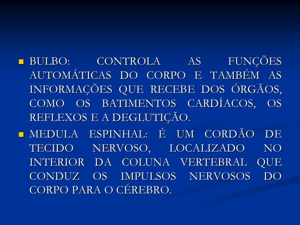 BULBO: CONTROLA AS FUNÇÕES AUTOMÁTICAS DO CORPO E TAMBÉM AS INFORMAÇÕES QUE RECEBE DOS ÓRGÃOS, COMO OS BATIMENTOS CARDÍACOS, OS REFLEXOS E A DEGLUTIÇÃ