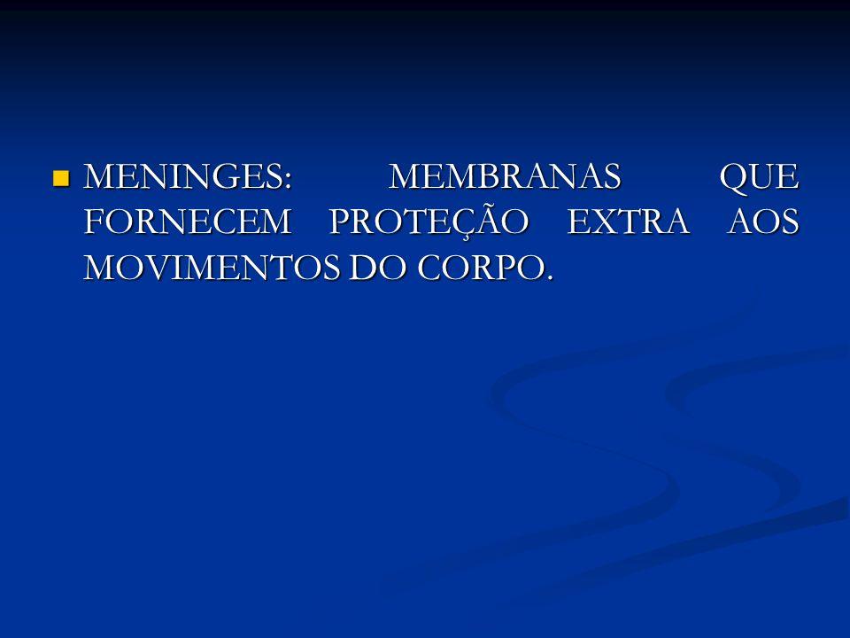 MENINGES: MEMBRANAS QUE FORNECEM PROTEÇÃO EXTRA AOS MOVIMENTOS DO CORPO. MENINGES: MEMBRANAS QUE FORNECEM PROTEÇÃO EXTRA AOS MOVIMENTOS DO CORPO.