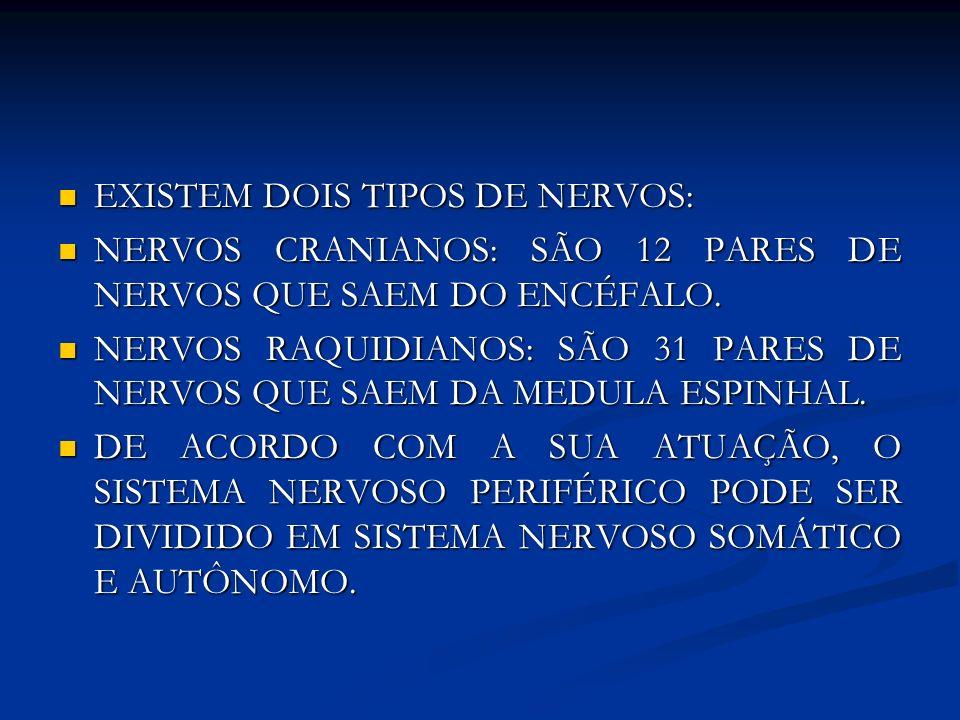 EXISTEM DOIS TIPOS DE NERVOS: EXISTEM DOIS TIPOS DE NERVOS: NERVOS CRANIANOS: SÃO 12 PARES DE NERVOS QUE SAEM DO ENCÉFALO. NERVOS CRANIANOS: SÃO 12 PA