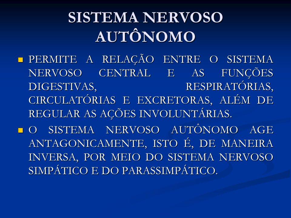 SISTEMA NERVOSO AUTÔNOMO PERMITE A RELAÇÃO ENTRE O SISTEMA NERVOSO CENTRAL E AS FUNÇÕES DIGESTIVAS, RESPIRATÓRIAS, CIRCULATÓRIAS E EXCRETORAS, ALÉM DE