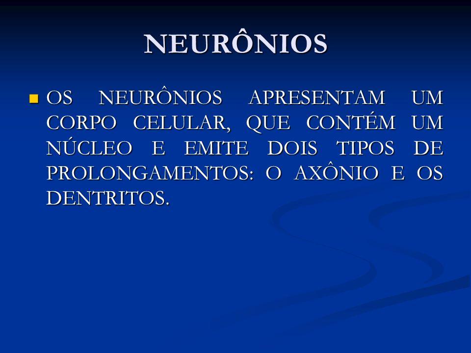 NEURÔNIOS OS NEURÔNIOS APRESENTAM UM CORPO CELULAR, QUE CONTÉM UM NÚCLEO E EMITE DOIS TIPOS DE PROLONGAMENTOS: O AXÔNIO E OS DENTRITOS. OS NEURÔNIOS A
