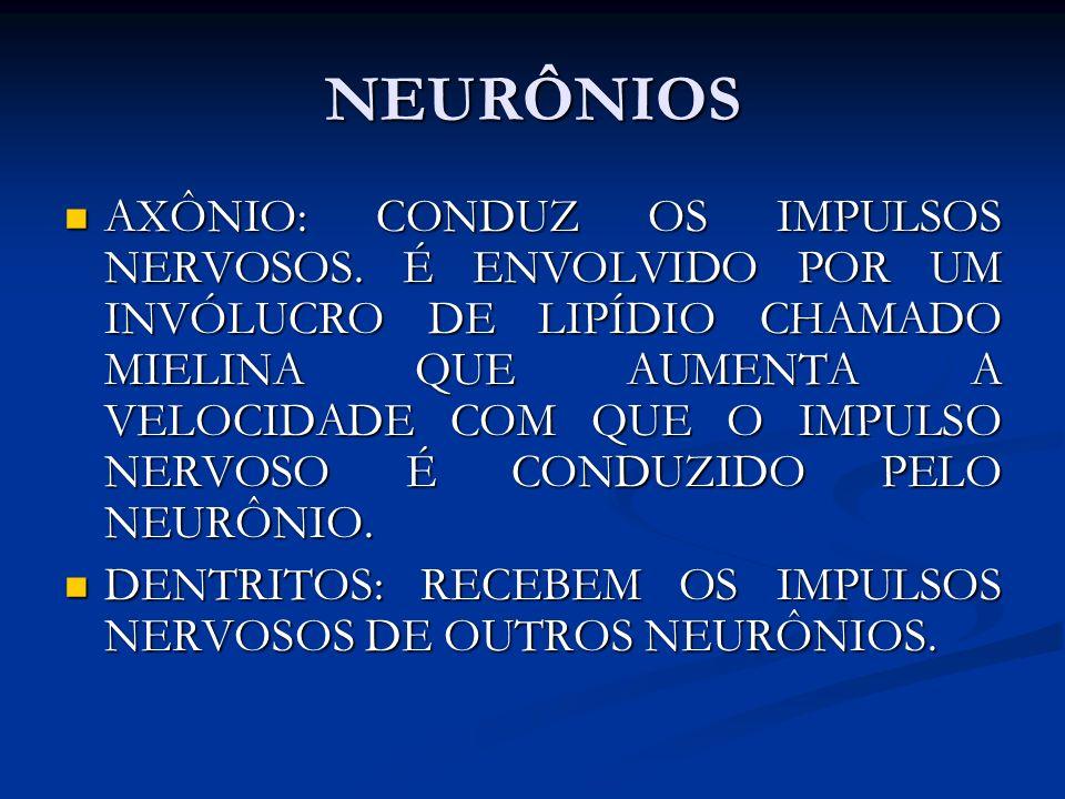 NEURÔNIOS AXÔNIO: CONDUZ OS IMPULSOS NERVOSOS. É ENVOLVIDO POR UM INVÓLUCRO DE LIPÍDIO CHAMADO MIELINA QUE AUMENTA A VELOCIDADE COM QUE O IMPULSO NERV
