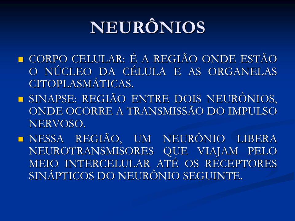 NEURÔNIOS CORPO CELULAR: É A REGIÃO ONDE ESTÃO O NÚCLEO DA CÉLULA E AS ORGANELAS CITOPLASMÁTICAS. CORPO CELULAR: É A REGIÃO ONDE ESTÃO O NÚCLEO DA CÉL