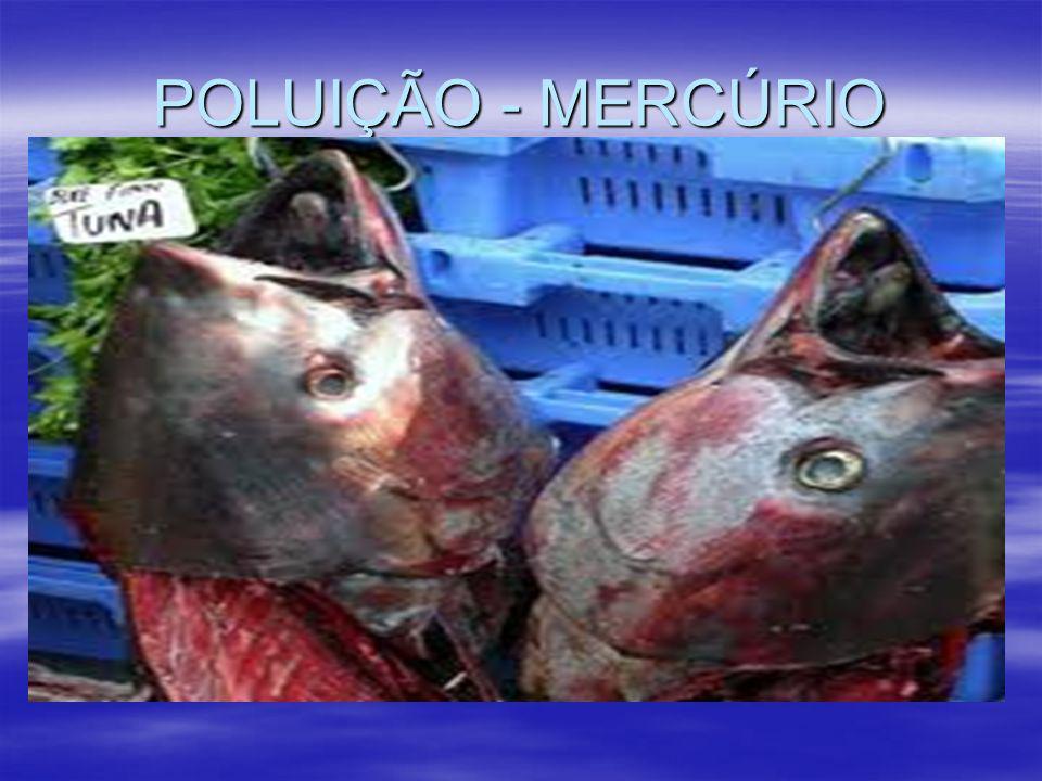 POLUIÇÃO - MERCÚRIO