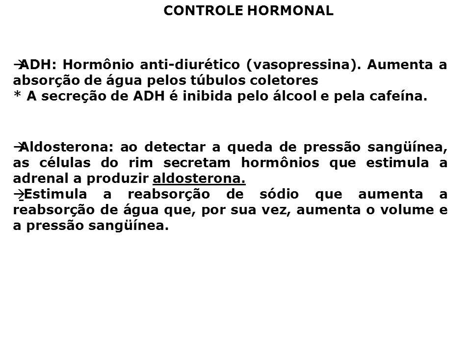 CONTROLE HORMONAL ADH: Hormônio anti-diurético (vasopressina). Aumenta a absorção de água pelos túbulos coletores * A secreção de ADH é inibida pelo á