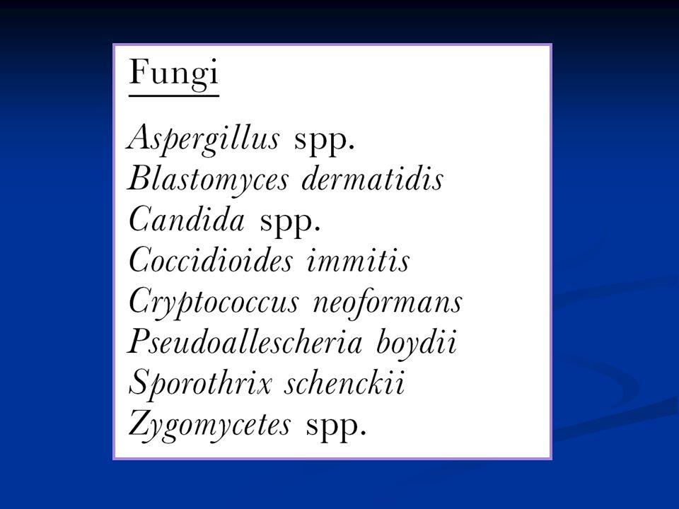 Micróglia Micróglia neurônios / astrócitos / oligodendrócitos neurônios / astrócitos / oligodendrócitos LCR LCR linfócitos linfócitos proteínas proteínas imunoglobulinas imunoglobulinas bandas oligoclonais bandas oligoclonais HIV e SNC