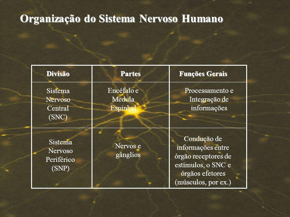 SISTEMA NERVOSO Células do Tec. Nervoso Células do Tec. Nervoso Morfologia do Neurônio Morfologia do Neurônio Impulso Nervoso Impulso Nervoso Sinapse
