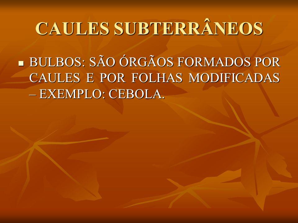 CAULES SUBTERRÂNEOS BULBOS: SÃO ÓRGÃOS FORMADOS POR CAULES E POR FOLHAS MODIFICADAS – EXEMPLO: CEBOLA.