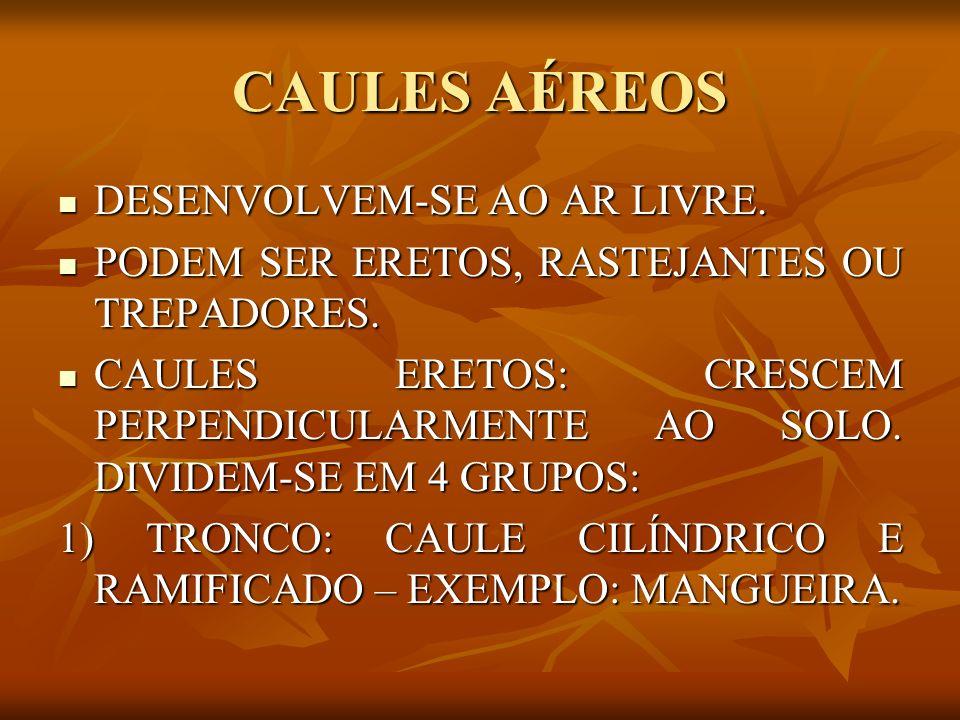 CAULES AÉREOS 2) HASTE: CAULE MOLE, GERALMENTE VERDE E RAMIFICADO – EXEMPLO: SALSA.