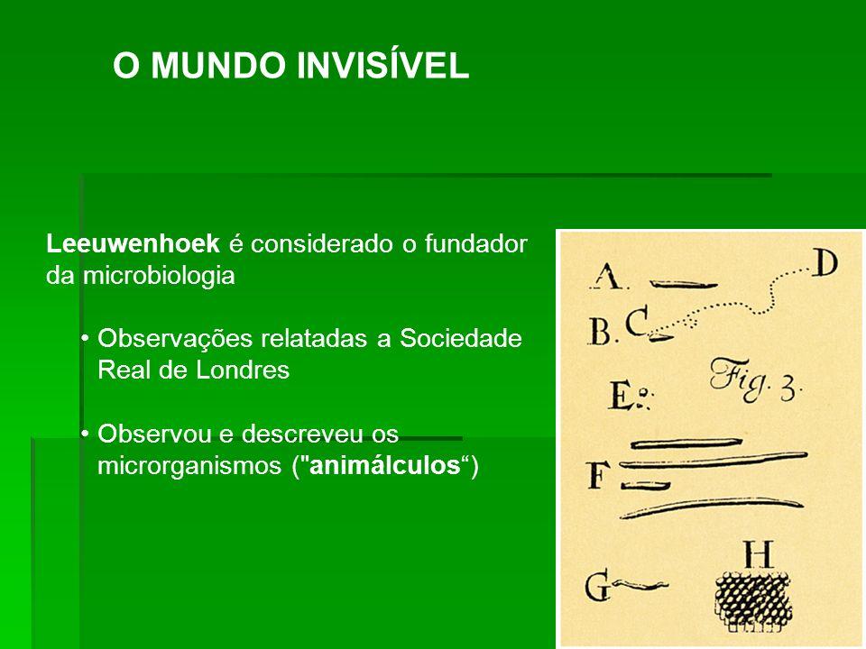 Leeuwenhoek é considerado o fundador da microbiologia Observações relatadas a Sociedade Real de Londres Observou e descreveu os microrganismos (