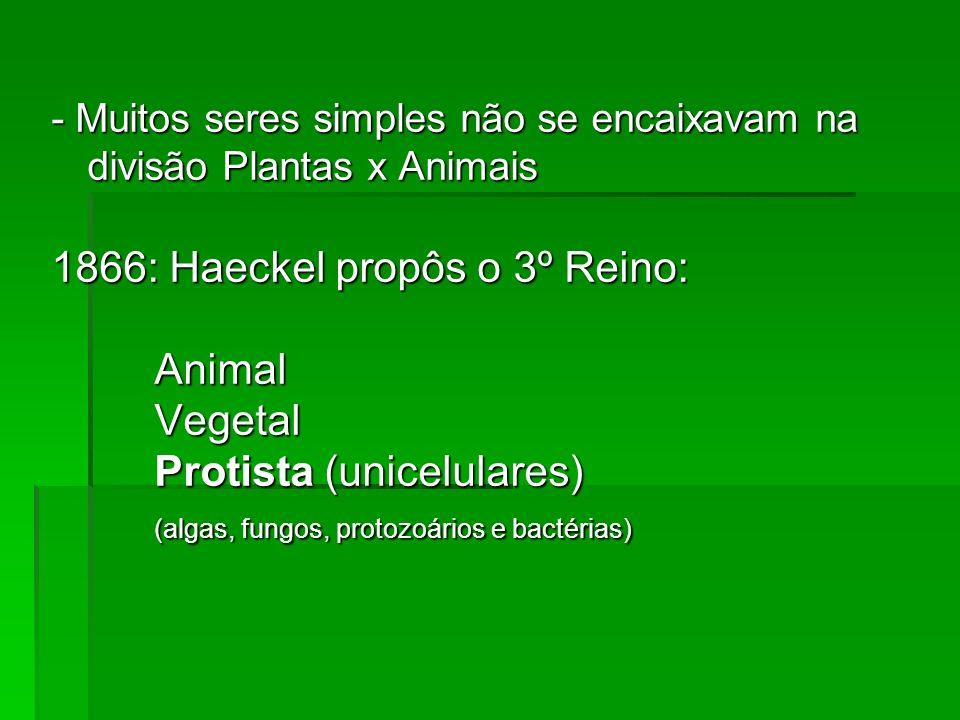 - Muitos seres simples não se encaixavam na divisão Plantas x Animais 1866: Haeckel propôs o 3º Reino: AnimalVegetal Protista (unicelulares) (algas, f