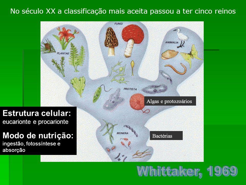 Estrutura celular: eucarionte e procarionte Modo de nutrição: ingestão, fotossíntese e absorção Algas e protozoários Bactérias No século XX a classifi