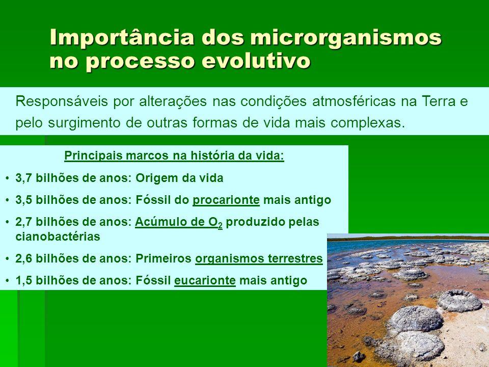 Importância dos microrganismos no processo evolutivo Responsáveis por alterações nas condições atmosféricas na Terra e pelo surgimento de outras forma