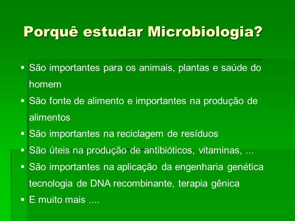Porquê estudar Microbiologia? São importantes para os animais, plantas e saúde do homem São fonte de alimento e importantes na produção de alimentos S