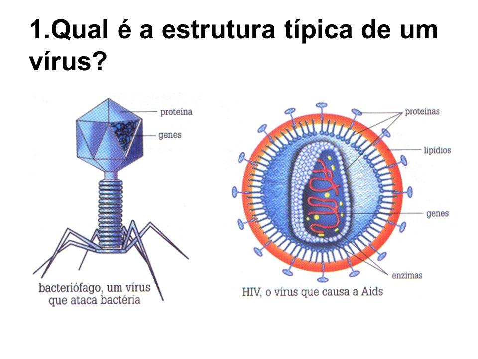 1.Qual é a estrutura típica de um vírus?
