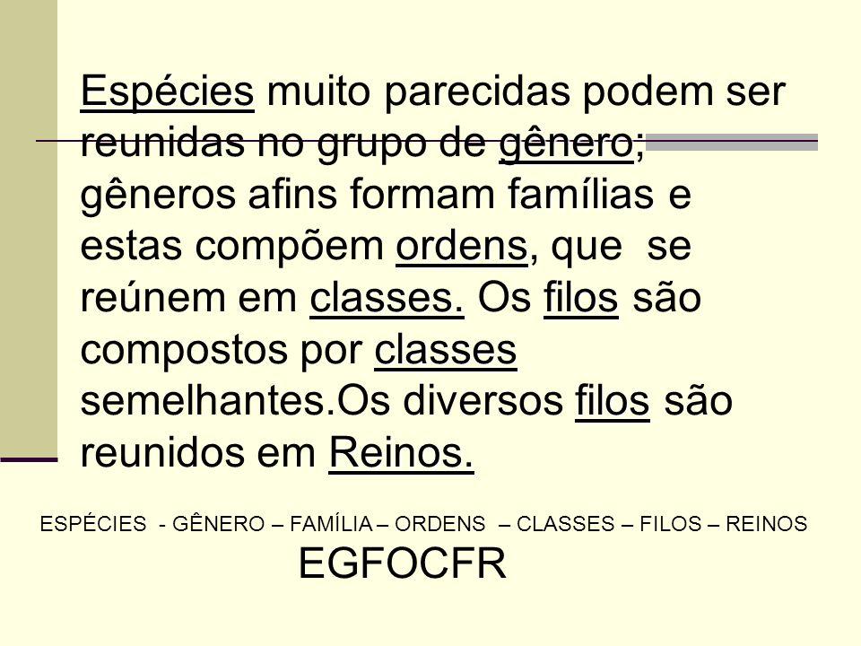 Espécies gênero famílias ordens classes.filos classes filos Reinos. Espécies muito parecidas podem ser reunidas no grupo de gênero; gêneros afins form
