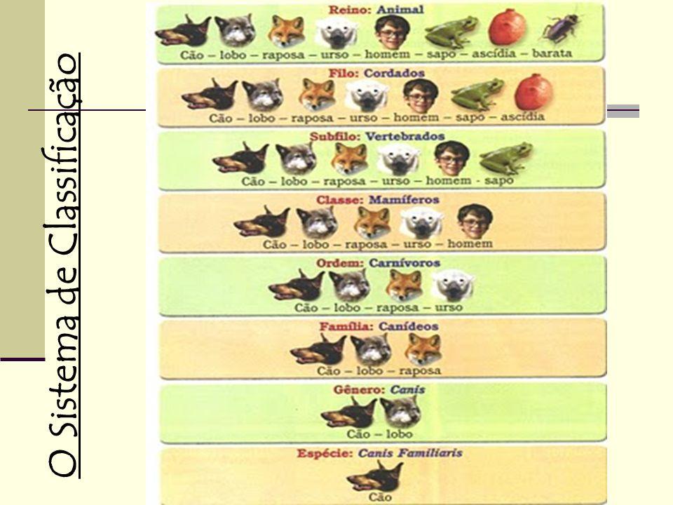 ReinoAnimalia FiloChordata ClasseMammalia OrdemPrimata FamíliaHominidae GêneroHomo EspécieHomo sapiens sapiens CategoriaClassificação taxonômicaHomem Exemplo da classificação científica do homem